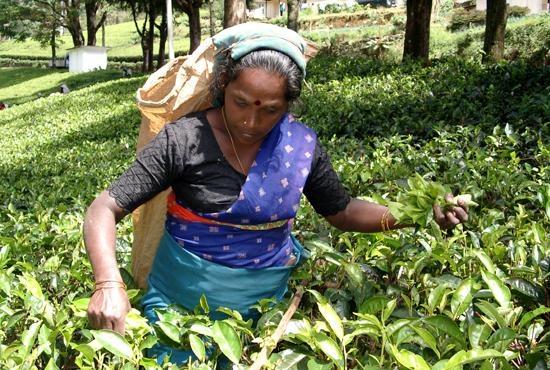 Donna nelle piantagioni di Nuwara Elyia - credits Lonelyplanet.it