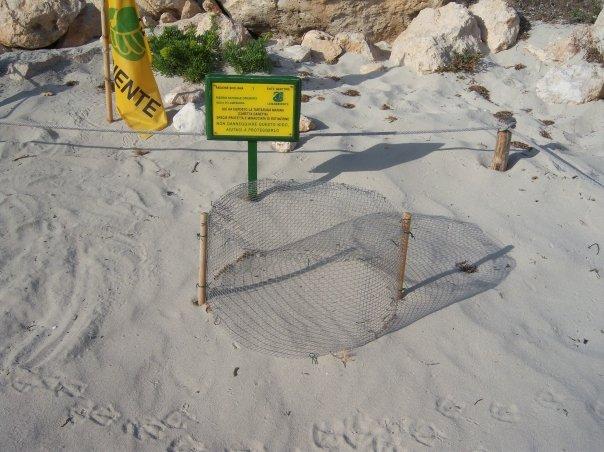 Tartarughe caretta caretta a Lampedusa