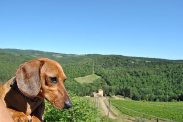 Week end nel Chianti con il cane