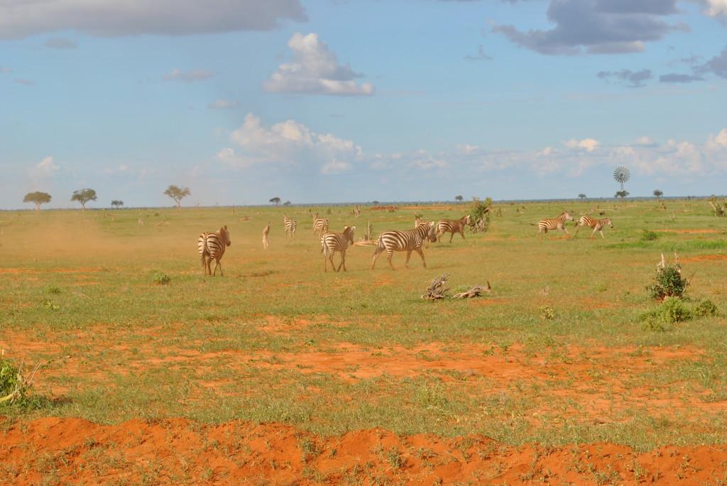 Quello che sicuramente vedrete in un Safari