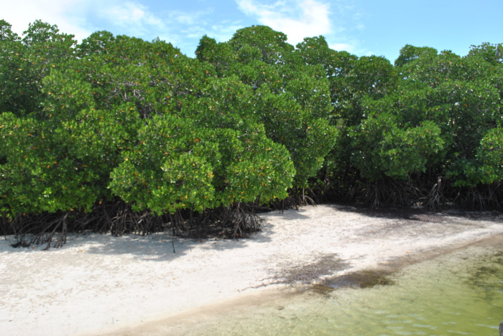 Escursione alle mangrovie