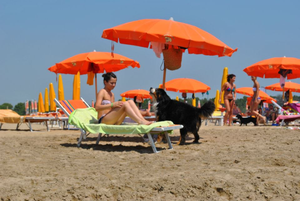 Cani al mare bibione dog frendly for Cani al mare