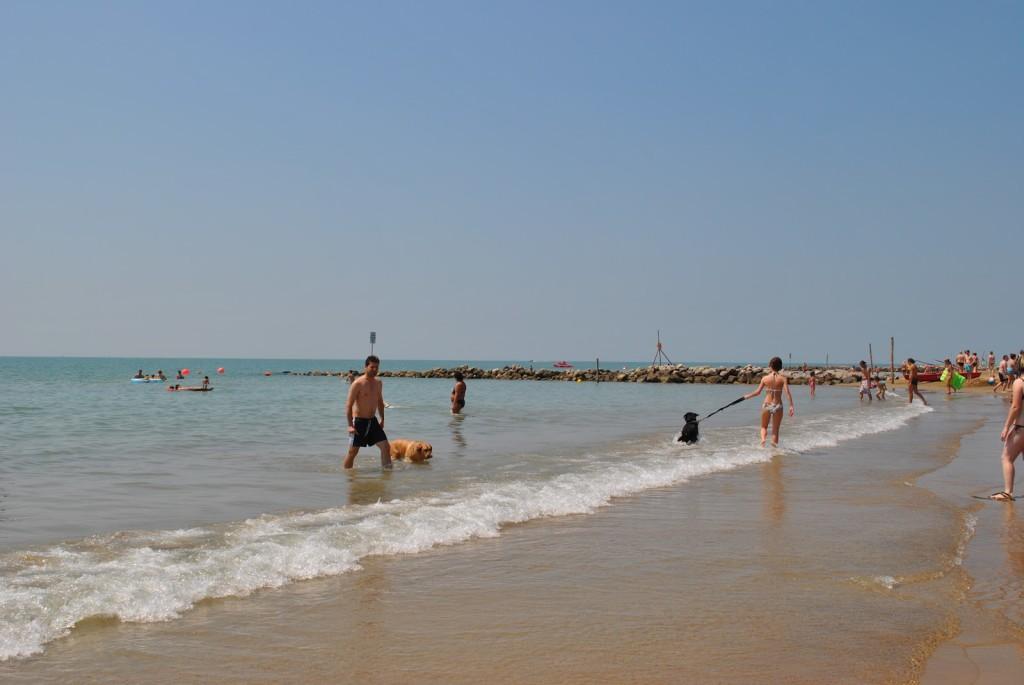 Cani in Spiaggia a Bibione