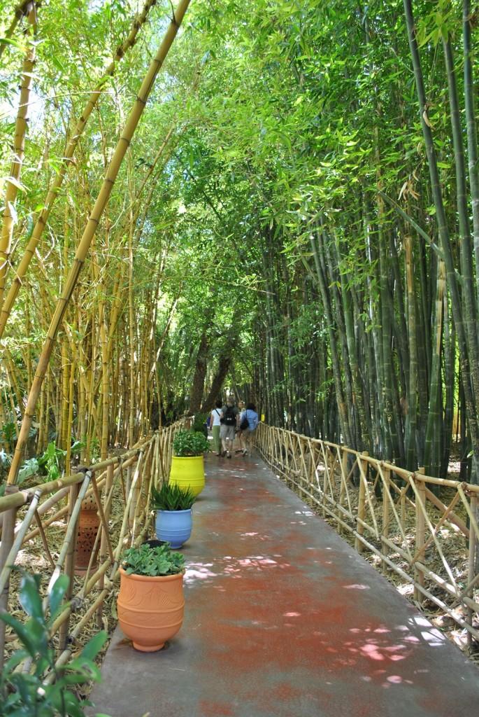 Un percorso fra il verde dei giardini di Majorelle