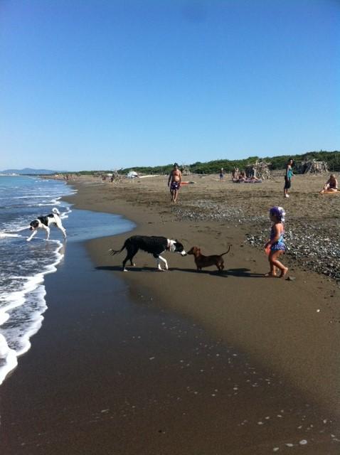 Spiaggia libera per cani a Marina di Bibbona