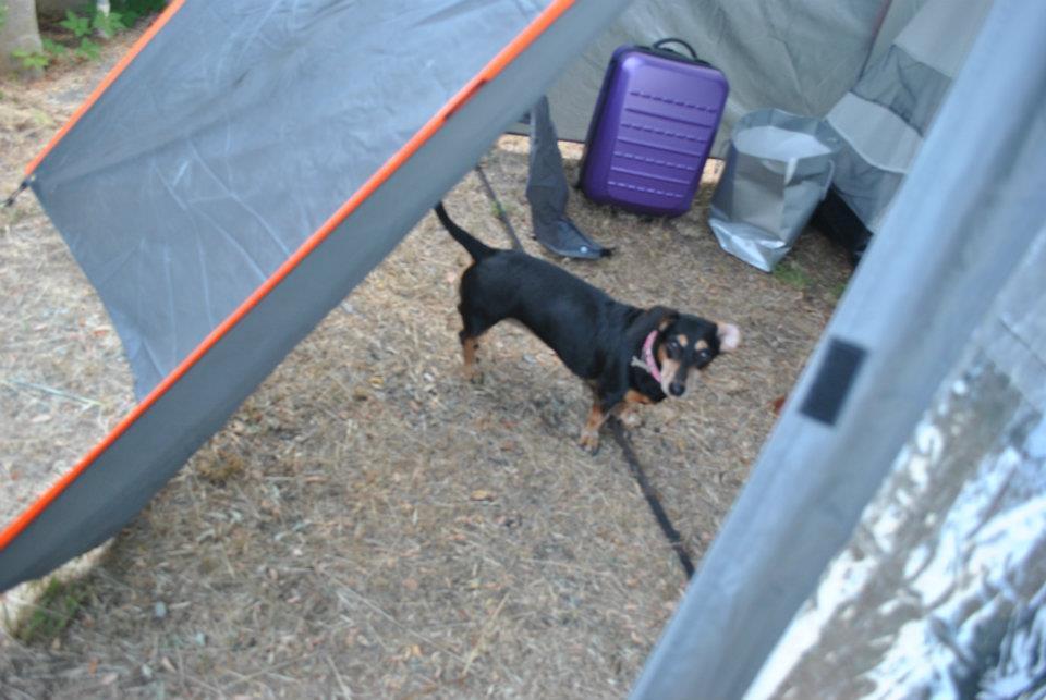 Andare con il cane in campeggio si può!