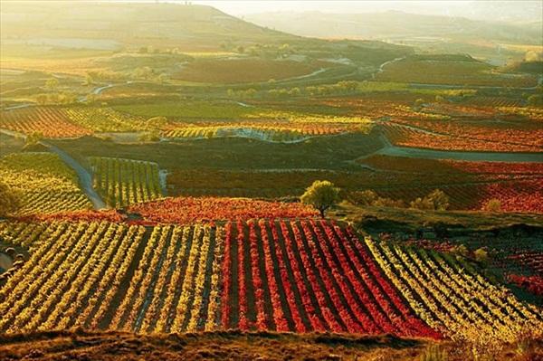 I Fantastici colori della Rioja