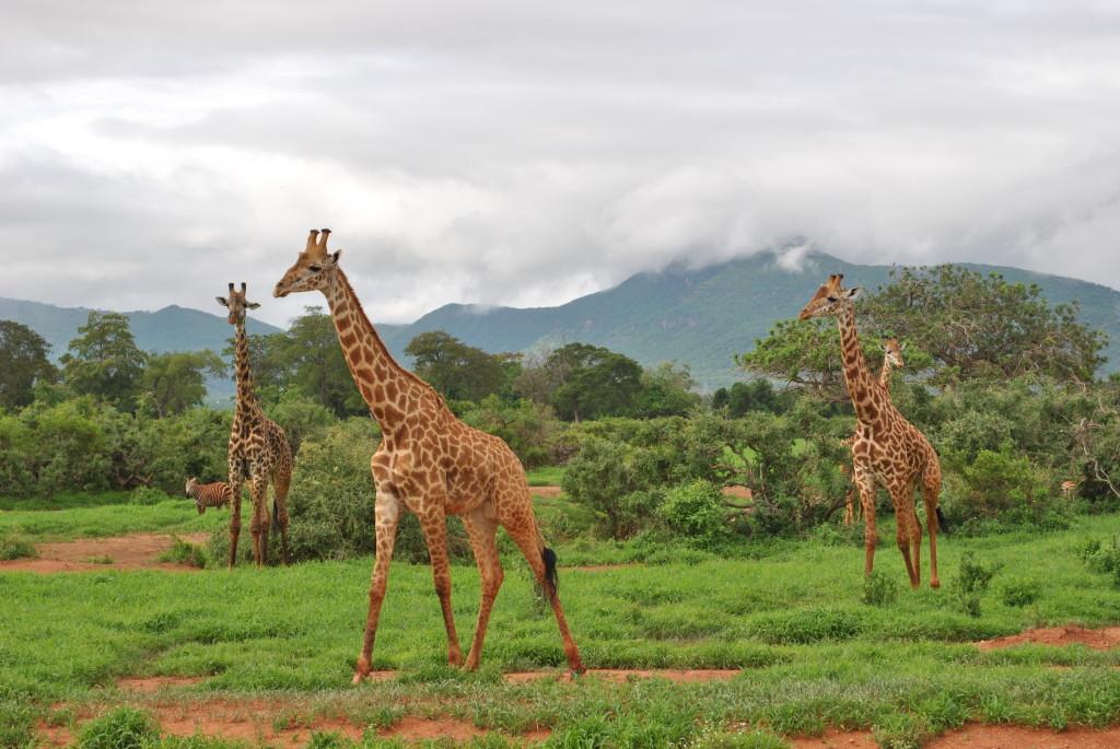 I colori del Safari in Kenya