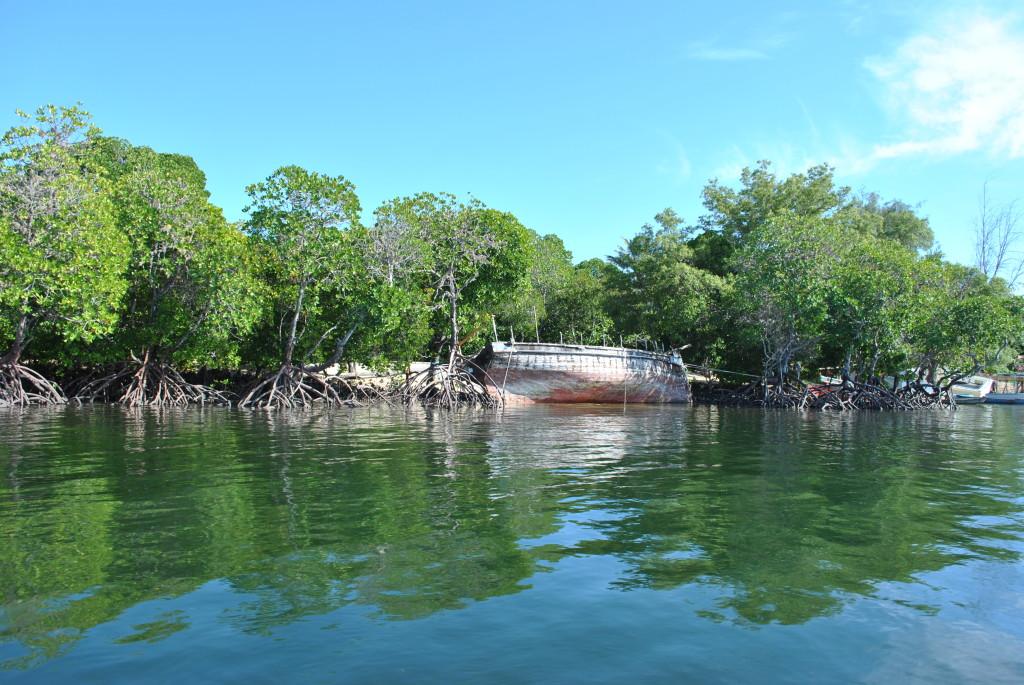 Escursione Mangrovie