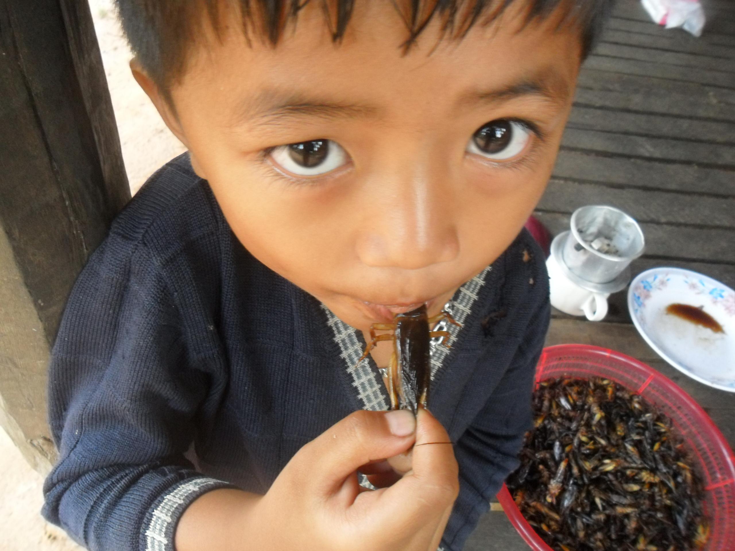 Mangiare gli insetti - photo credit Enrico Crespi