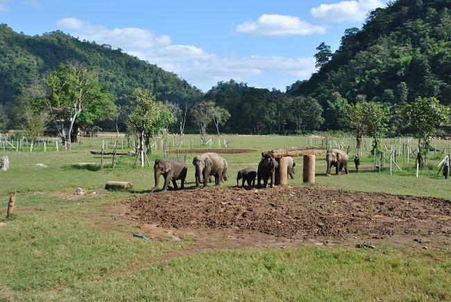 Gli elefanti all'interno del parco