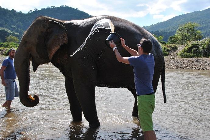 Facciamo il bagno agli elefanti!