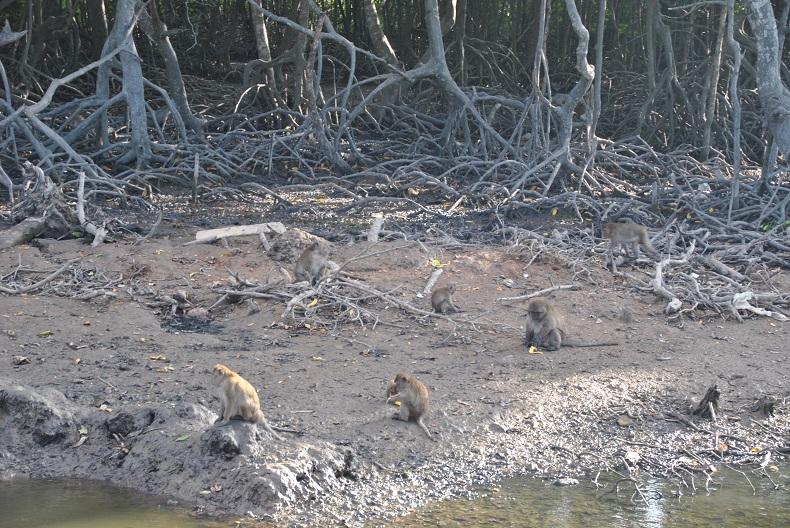 Le scimmie di Phuket