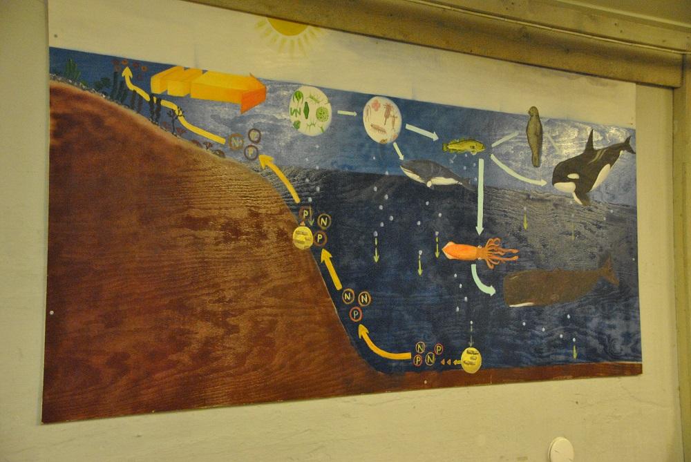 Il Museo del Whale Safari