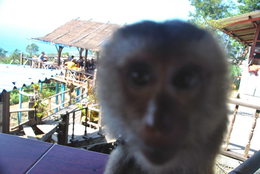 scimmiette incazzose