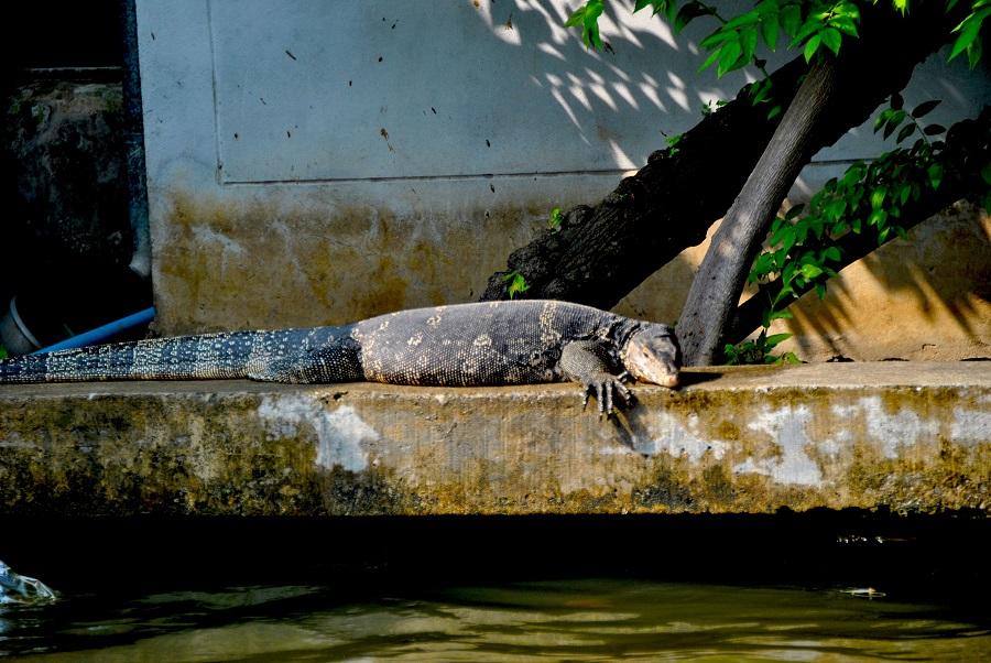 Animaletti che abitano i fiumi thailandesi