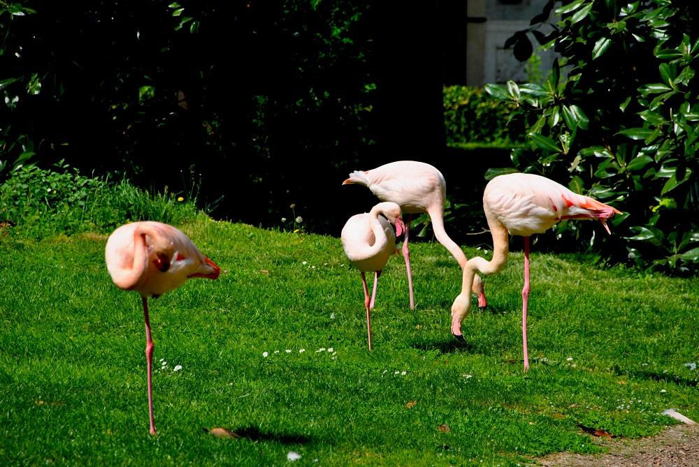 Fenicotteri rosa... a Milano