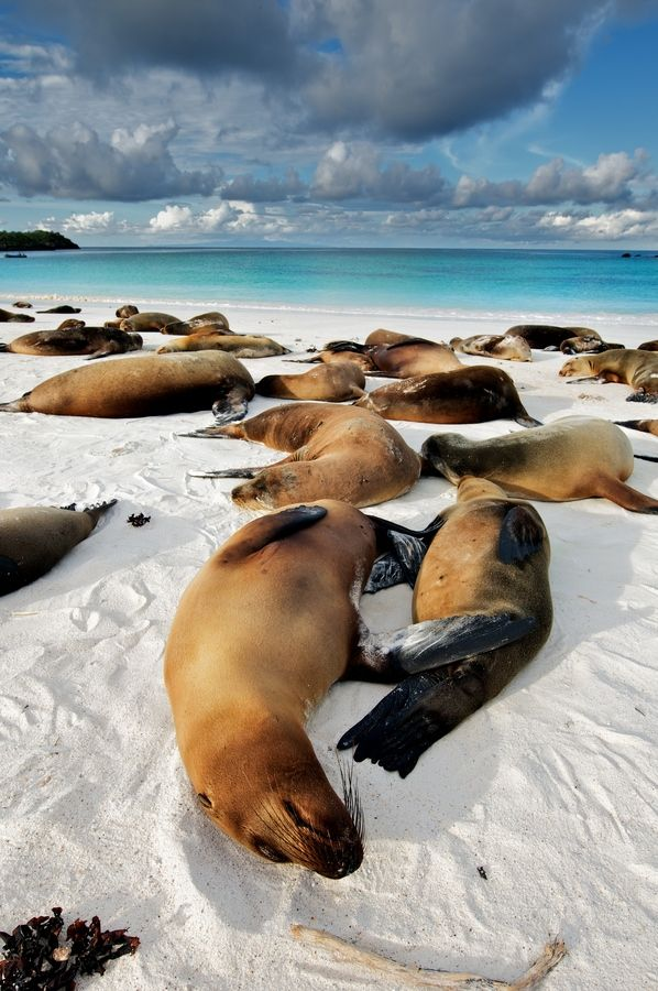 Galapagos by Trevor Cole