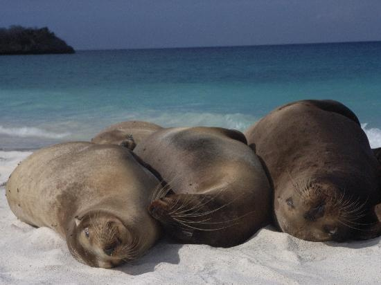 Crociera alle Galápagos