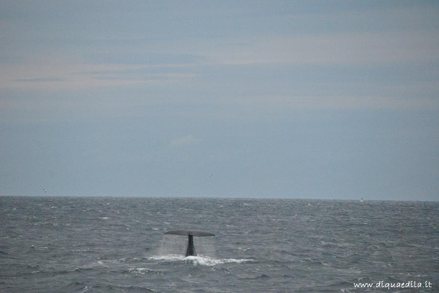 Safari Artico con avvistamento balene