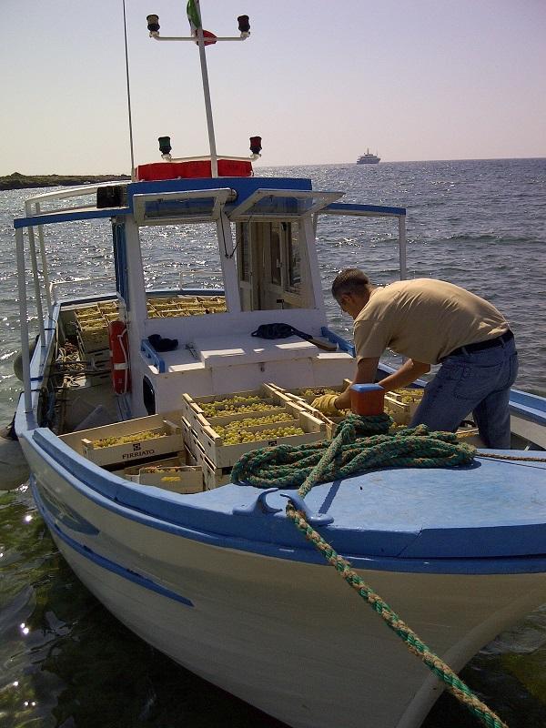 La viticoltura di mare a Favignana
