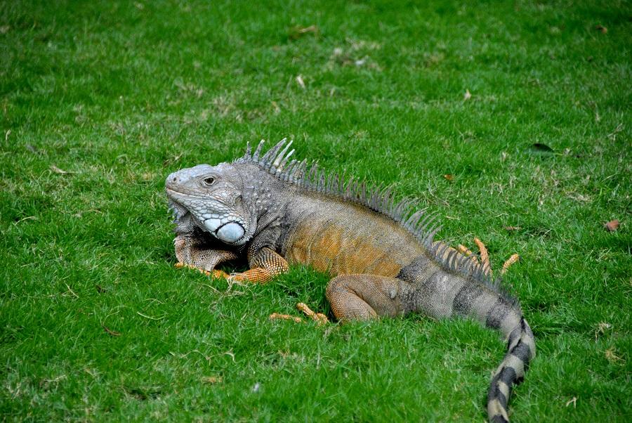 Parco delle Iguane, Guayaquil