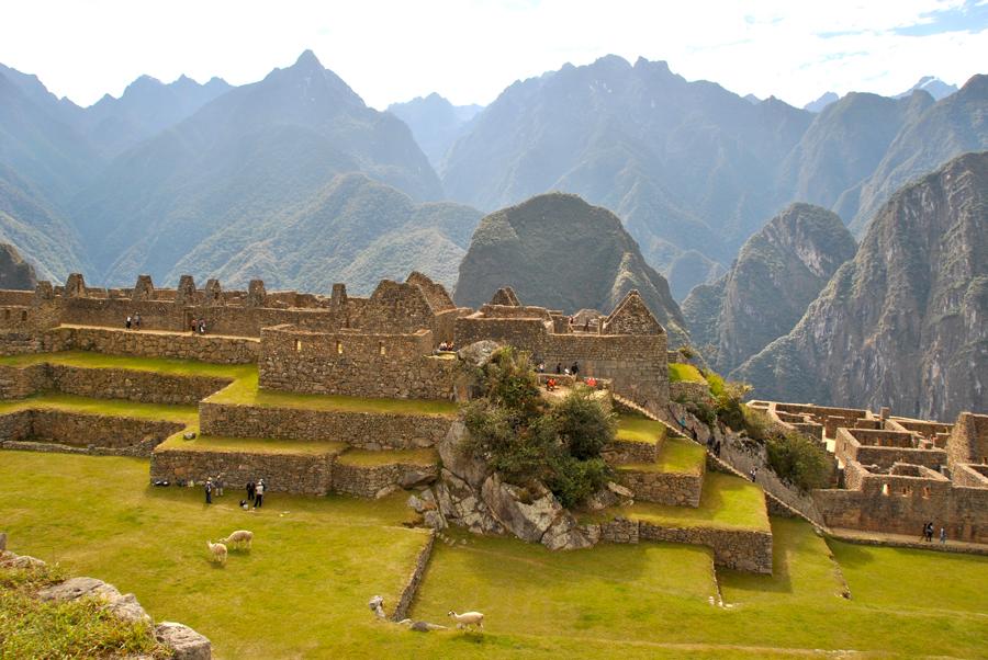 Alpaca che brucano indisturbati a Machu Picchu