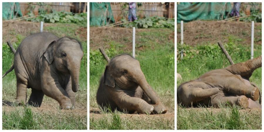 Escursione all'ospedale degli elefanti