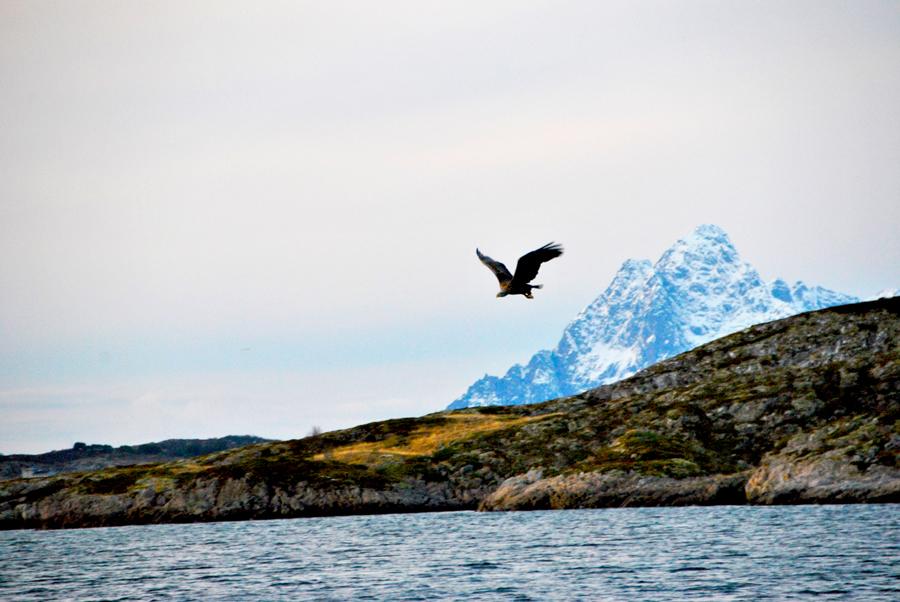 Il volo dell'aquila di mare