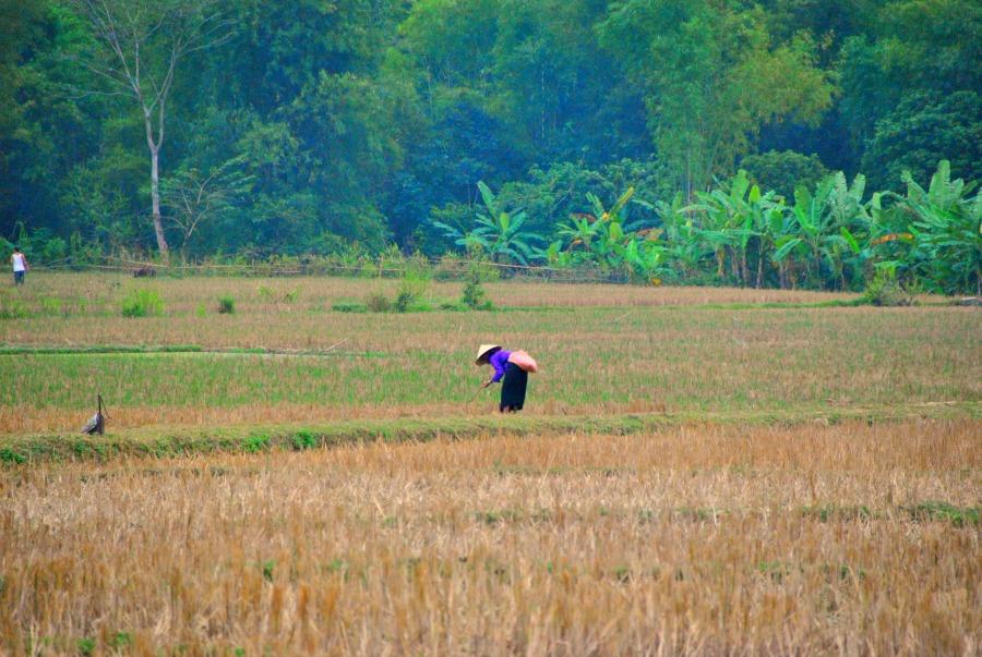 Gli scenari romantici delle risaie a Mai Chau