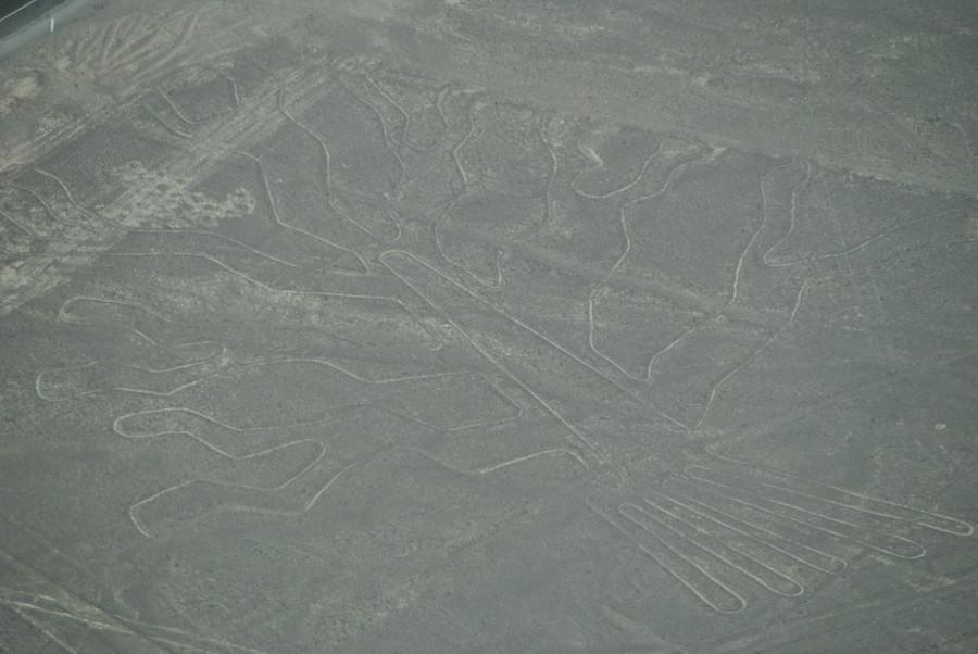 Linee di Nasca - Albero