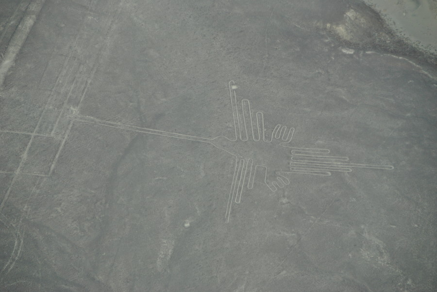 Linee di Nasca - Colibrì