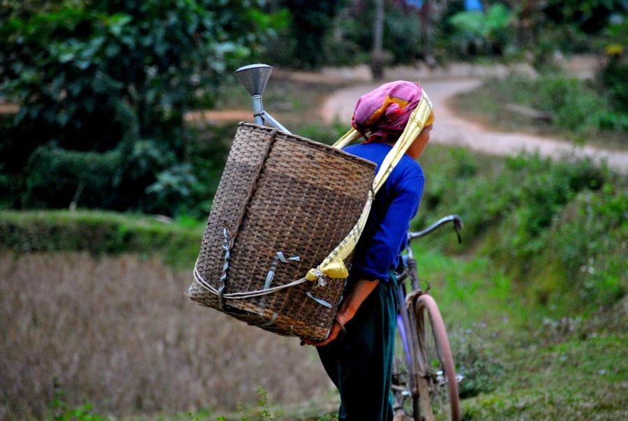 Raccoglitrice di riso in Vietnam