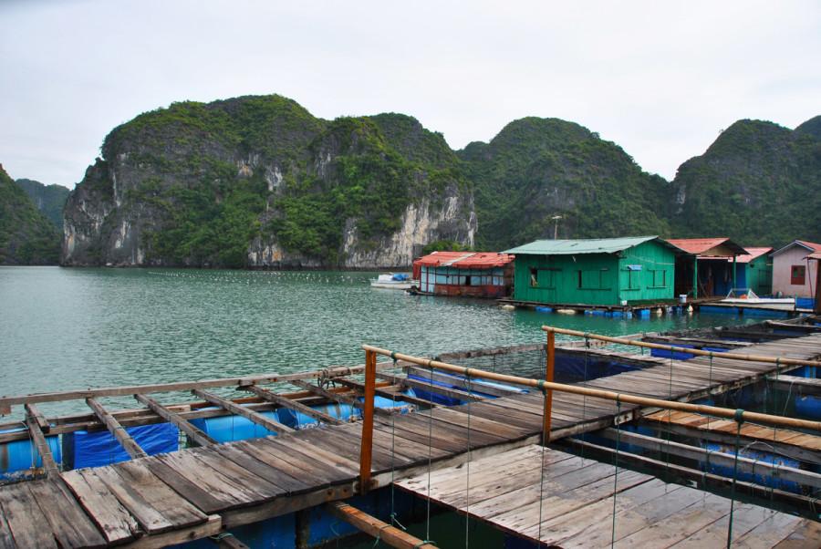 Allevamento di ostriche ad Halong