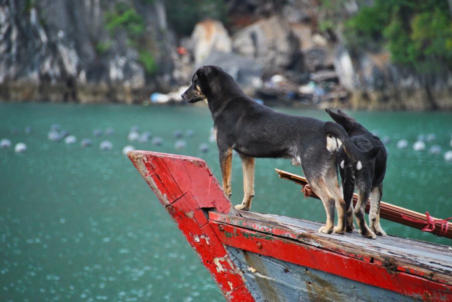 Cani di Halong