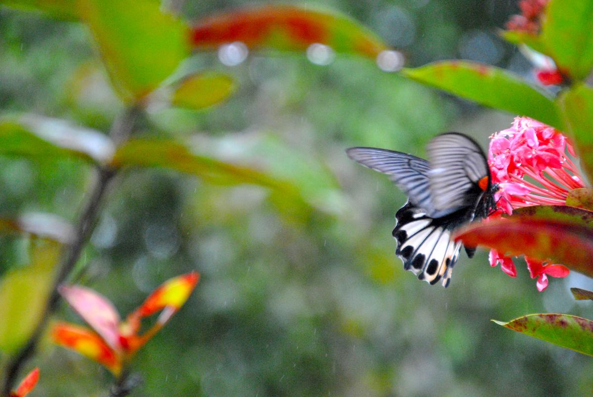 Farfalle e Pioggia ad Huế