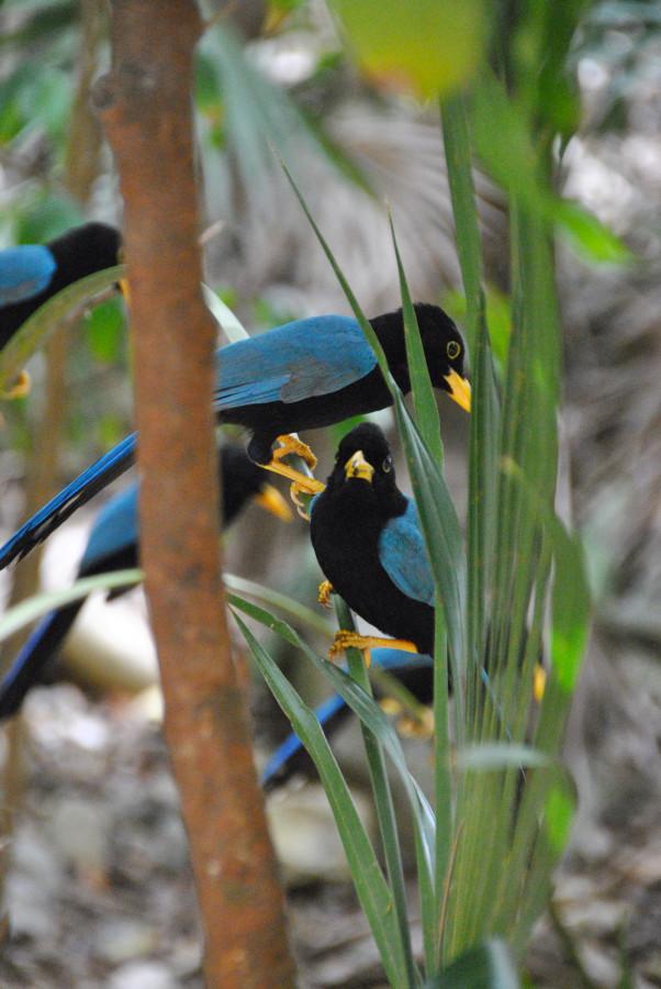 Uccelli a Tulum