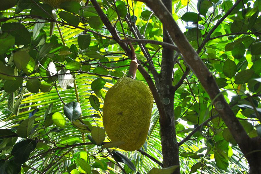 Strani alberi da frutto