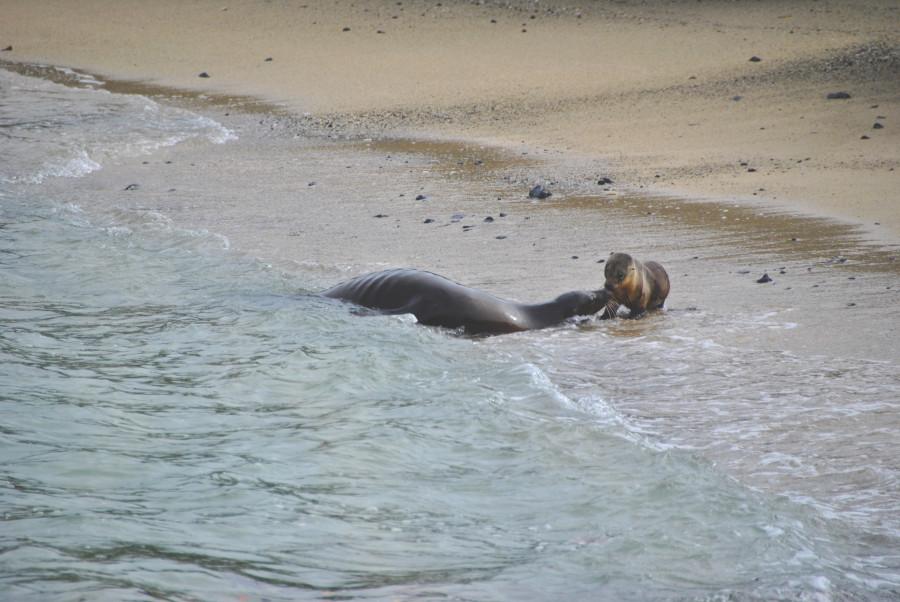 Leoni Marini Galapagos