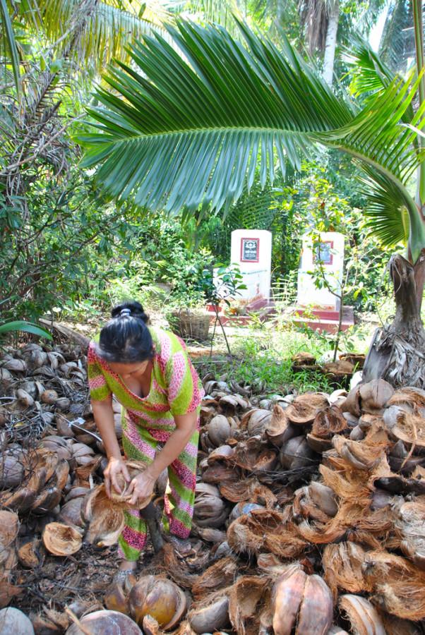 La separazione del cocco