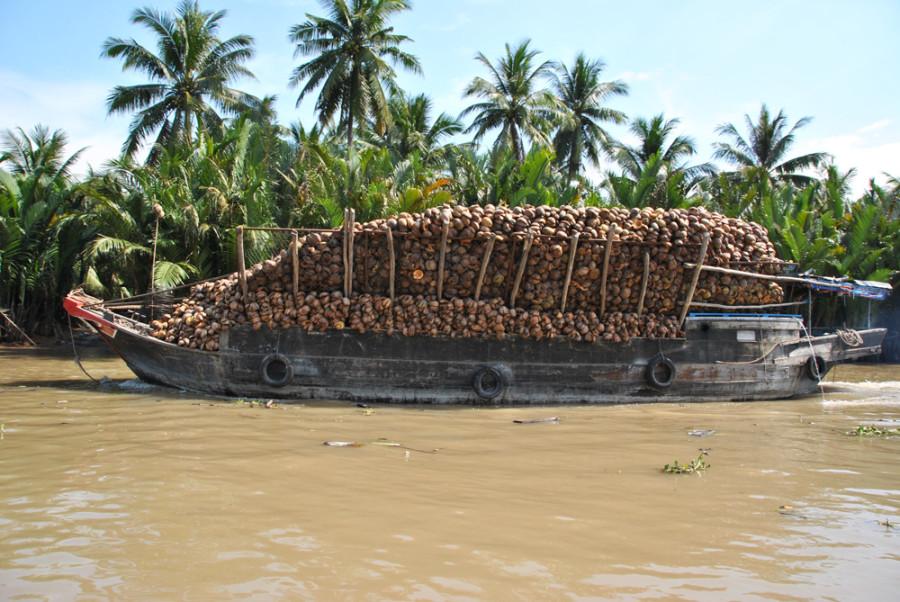Trasporto di cocco sul delta del Mekong