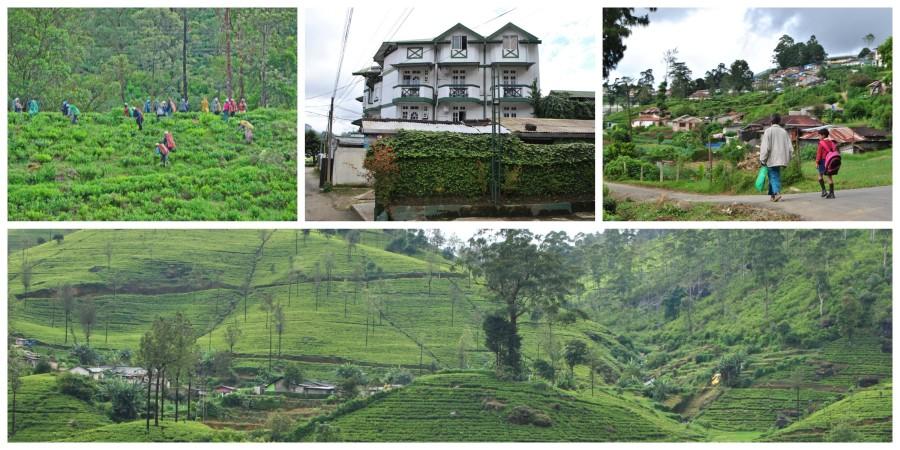 pernottamento piantagione di tè sri lanka