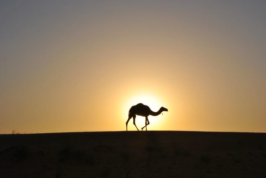 dormire deserto Oman