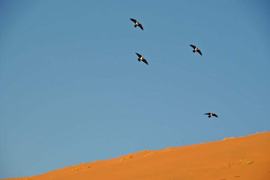 deserto namib colori