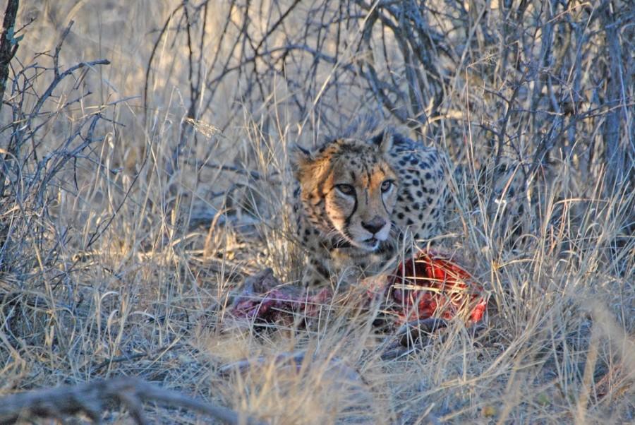 felino namibia trekking1000