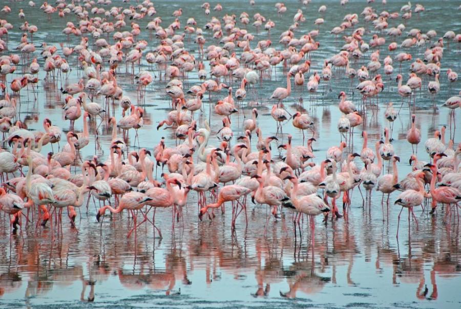 fenicotteri namibia 1000