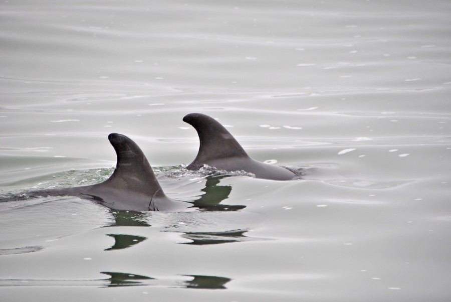 delfini-swakopmund1000
