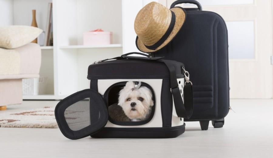 viaggiare-in-treno-con-il-cane