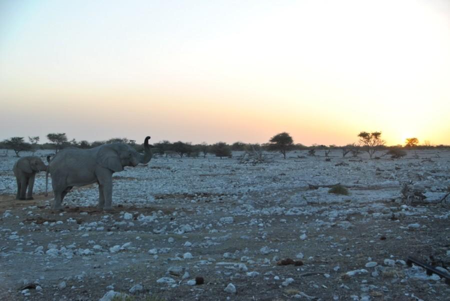 elefante tramonto etosha1000