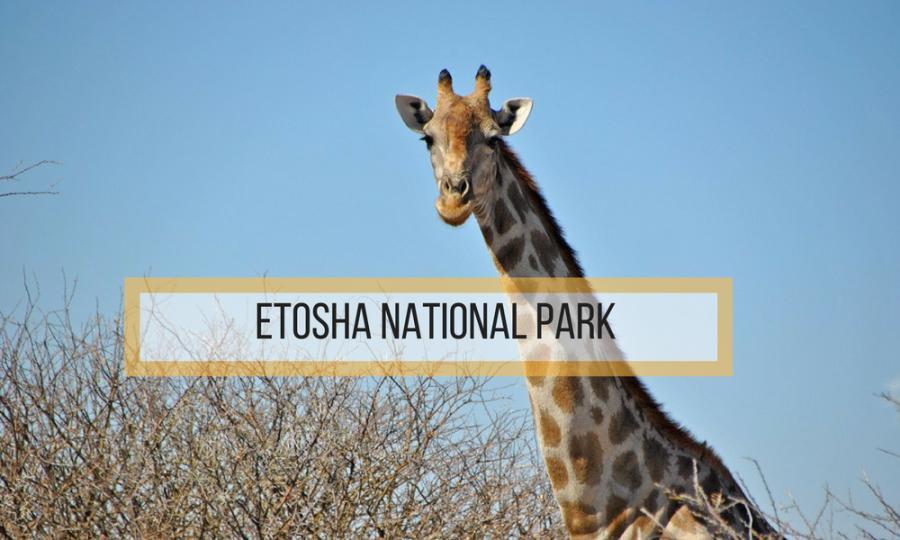 etosha national park cose da sapere